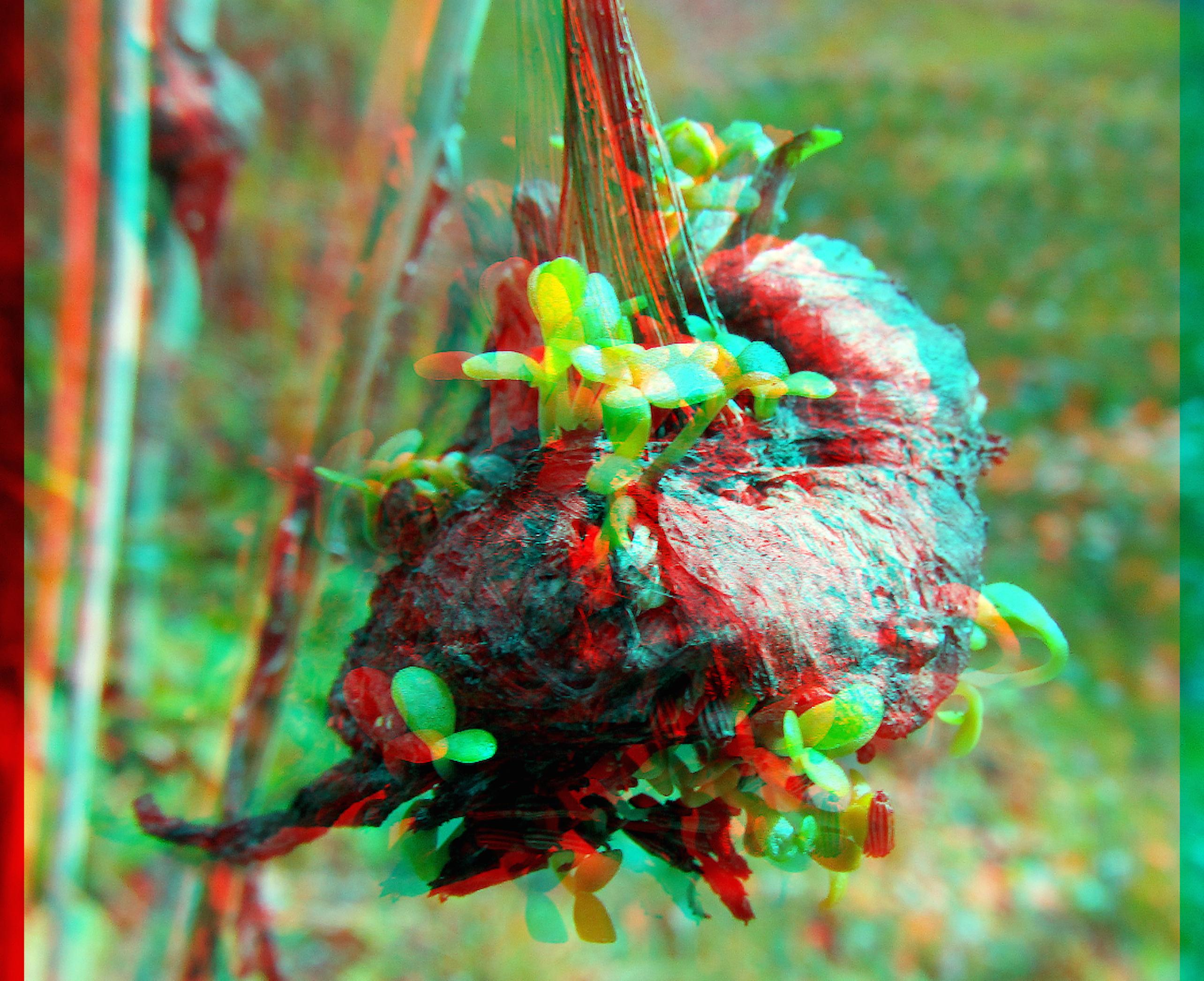 rotte_daisy 3D